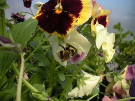 gardenskirt_5.jpg